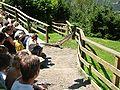 2008 07 15 Bird Care Centre of Castel Tyrol 60740 D9767.jpg