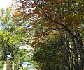 2011 NewburyMassachusetts October 3890.jpg