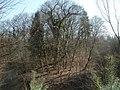 20120316Wasserloch Hockenheim04.jpg