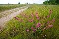 20120612 Дорога возле деревни Антоново.jpg