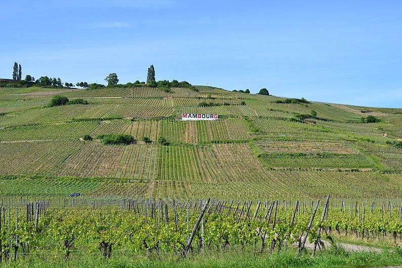 2012 05 17 Sigolsheim, coteau du Mambourg.JPG
