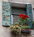 2012 windowbox Venice 7248159592.jpg