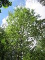 20130731Speyrer Wald02.jpg