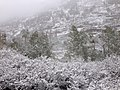 2014-06-17 09 12 57 Snow in June on Aspens and Willows with immature foliage at Roads End in Lamoille Canyon, Nevada.jpg