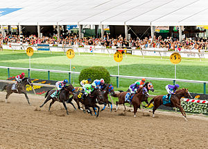 2014 Preakness Stakes - Field of the 2014 Preakness Stakes as they first pass the stands. Pablo Del Monte is in front, Winner California Chrome is horse number 3.