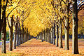 2015-10-26 Goldener Oktober in der Herrenhäuser Allee im Georgengarten in Hannover.jpg