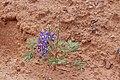 2015.05.08 13.53.59 IMG 1998 - Flickr - andrey zharkikh.jpg