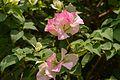 2016-04-03 Flower at the Singapore Botanic Gardens 06.jpg