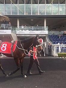 Winx (horse) - Wikipedia