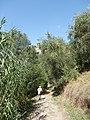 2018-09-14 Via Corta Montecatini 10.jpg