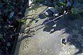 3695viki Kościółek z cmentarzykiem w Obórkach. Foto Barbara Maliszewska.jpg