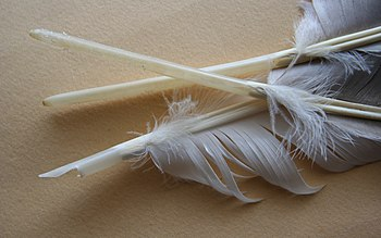 English: Three goose feathers in stages of bei...