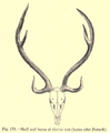 6. antlers axis.png