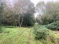 6038 Meerboom weg Otterstation, Otteroversteekplaats Fauna en Flora Passage Natuur Biodiversiteit Friesche Veen Cafe FreischeVeen.jpg