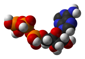 Structure of the coenzyme adenosine triphosphate, a central intermediate in energy metabolism.