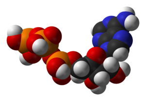 Structure of the coenzyme adenosine triphospha...