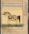 A horse whose body is formed of three pairs of copulating Wellcome L0033072.jpg