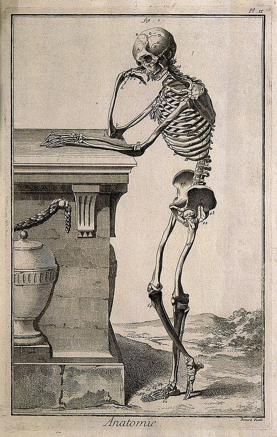 Анатомия прикольные картинки, обнимаются парень девушка