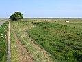 Abandoned farmland, Frampton Marsh, Lincs - geograph.org.uk - 196499.jpg