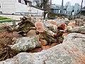 Abattage de platanes, Mussidan (2).jpg