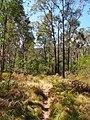 Acacia Flats - panoramio.jpg