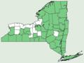 Acer pensylvanicum NY-dist-map.png