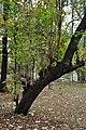 Acharya Jagadish Chandra Bose Indian Botanic Garden - Howrah 2011-02-20 1637.JPG