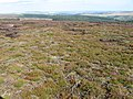 Across Brogging Moss - geograph.org.uk - 1449775.jpg
