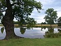Adam's Pond, Richmond Park - geograph.org.uk - 1453459.jpg