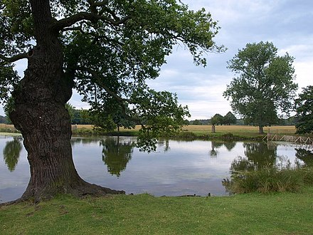 Adams Pond Adam's Pond, Richmond Park - geograph.org.uk - 1453459.jpg