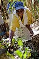 Africa Food Security 16 (10665311553).jpg