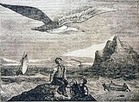 """""""Albatroz"""" - Woodcut from the journal """"O Panorama"""" 1837 edition (From the Dr. Nuno Carvalho de Sousa Private Collections - Lisbon)"""
