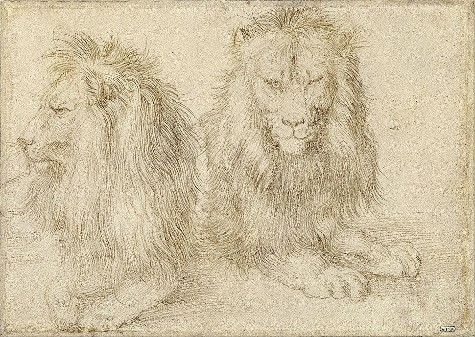 Albrecht Dürer - Two seated lions - Google Art Project