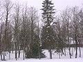 Albu - panoramio - Aulo Aasmaa.jpg