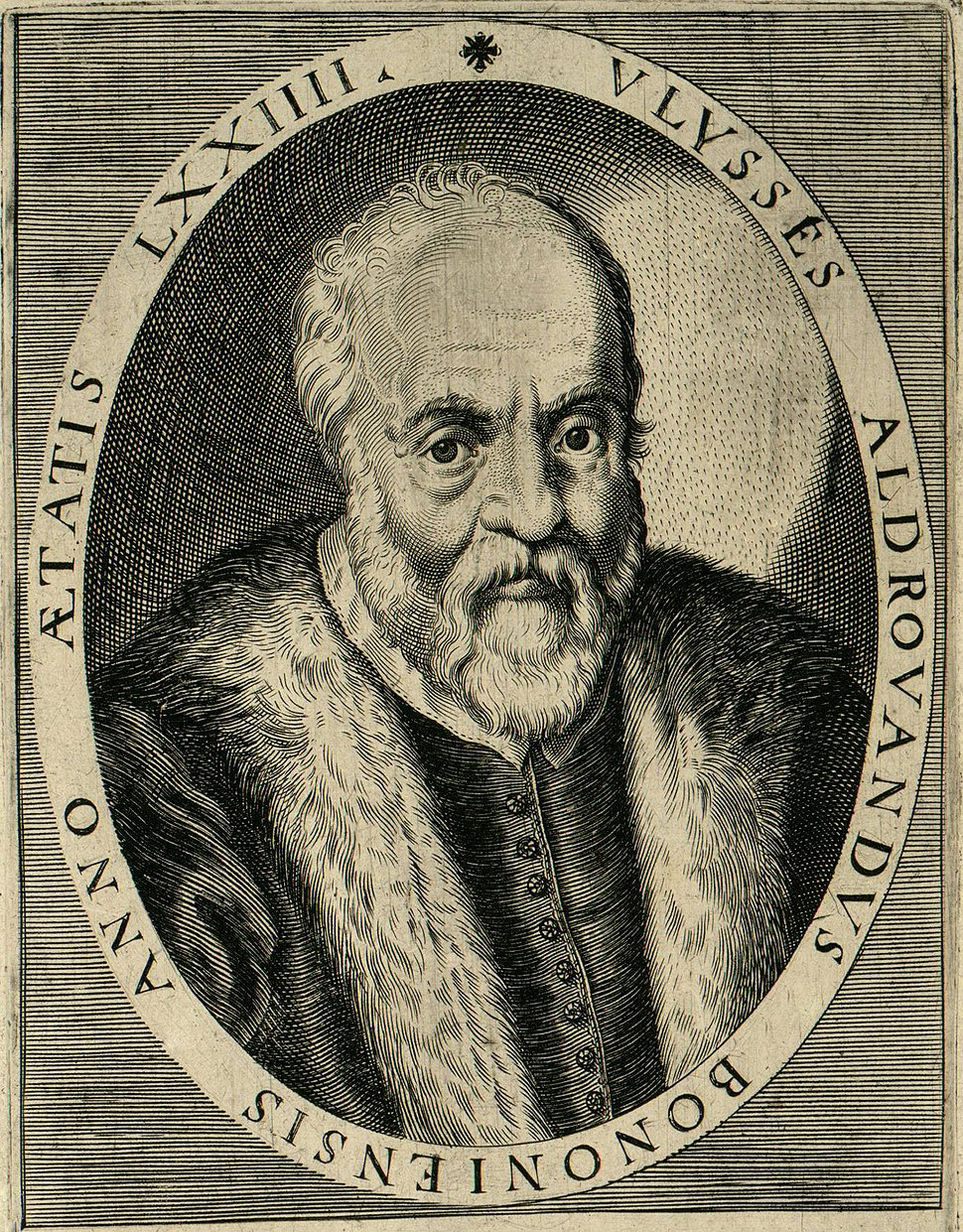 Aldrovandi 1522-1605