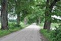Aleja, Upespils, Suntažu pagasts, Ogres novads, Latvia - panoramio.jpg