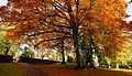 Amazing autumn trees in the Hexham Abbey Garden - panoramio - somaliayaswan (1).jpg