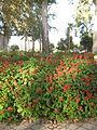 Amin al-Islami Park - Trees and Flowers - Nishapur 070.JPG