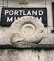 Ammonite.250pix.jpg