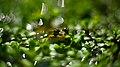Amphibian life.jpg