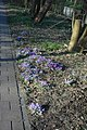 Amstelveen - panoramio - Han Jongeneel (2).jpg