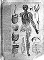 Andrea Vesalius, Suorum de humani corporis, 1543. Wellcome L0027014.jpg