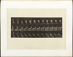 Animal locomotion. Plate 417 (Boston Public Library).jpg