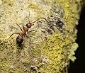 Ant (162890117).jpeg