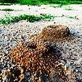 Ant Hills (14817340587).jpg