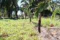 Araguainha - State of Mato Grosso, Brazil - panoramio (106).jpg