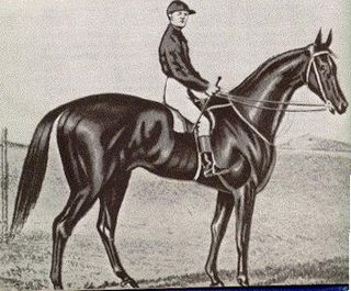 Archer (horse) Australian-bred Thoroughbred racehorse