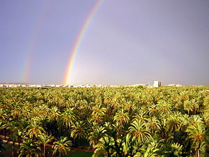 Rainbow over the palm trees, in Elche (Spain)