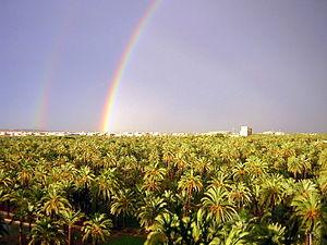 Arcoiris en el Palmeral de Elche.jpg