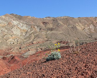 Callville, Nevada - View east of Callville Bay Road